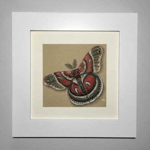Red moth drawing