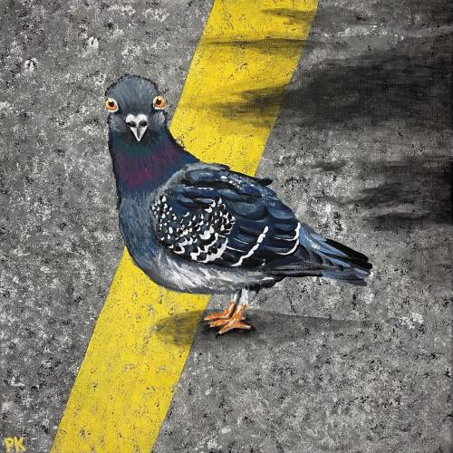 Pigeon in the Road
